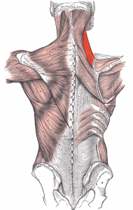 Scapular movement dysfunction
